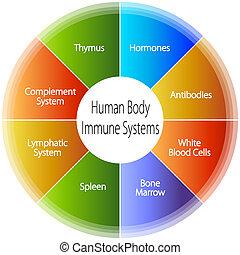 cuerpo, inmune, sistemas, humano, gráfico