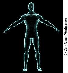 cuerpo, lleno, radiografía, humano
