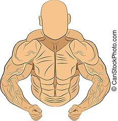 cuerpo, músculo, ilustración, vector, hinchado, dibujo, hombre