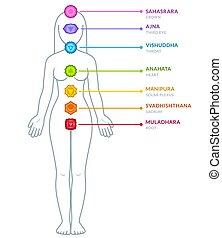 cuerpo, macho, chakras, infographic