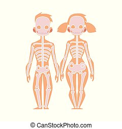 cuerpo, plano, esqueleto, anatomía, vector, humano, estructura