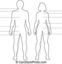 cuerpo, pointers., mujer, contorno, aislado, vector, siluetas, infographic, humano, hombre, figuras.