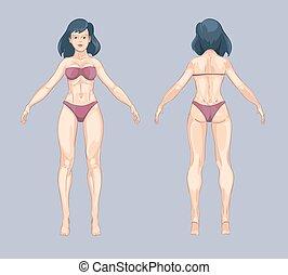 cuerpo, posición, mujer, pose., espalda, ilustración, style., vector, hembra, frente, caricatura, o