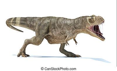cuerpo, vista., lleno, perspectiva, t-rex