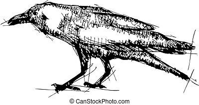 cuervo, bosquejo, vector, ilustración