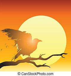 cuervo, delante de, sol poniente