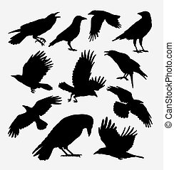 cuervo, pájaro, siluetas, animal