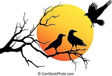 cuervos, vector, rama de árbol
