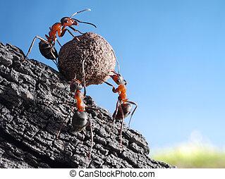 cuesta arriba, piedra, rollos, hormigas, equipo