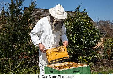 cuidado, apicultor, colonia, abeja