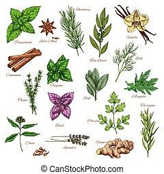 culinário, erva, e, tempero, esboço, para, alimento, desenho
