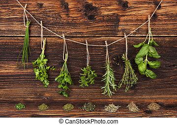 Culinary herbs. Aromatic herbs, basil, coriander, parsley, ...