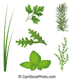Culinary Herbs - Chives, parsley, rocket, basil, rosemary ...