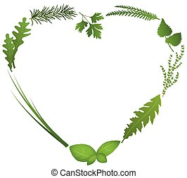 Culinary herbs for salads and cooking shape a heart. Isolated vector illustration on white background.