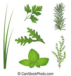 Culinary Herbs - Chives, parsley, rocket, basil, rosemary...
