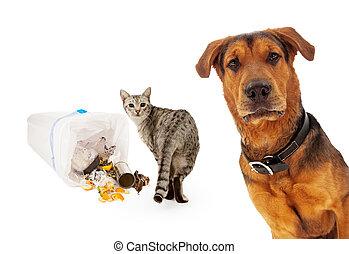 culpable, perro, inocente, gato