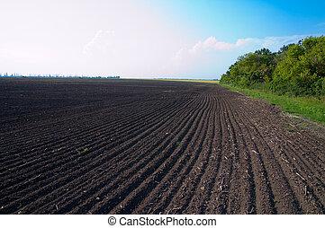 cultivado, campo, após, cultivo, de, terra