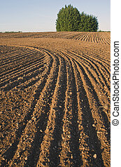 cultivated farm field landscape