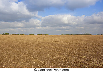 cultivated field in autumn