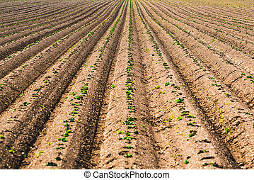 Cultivated field, ploughed rows in pattern