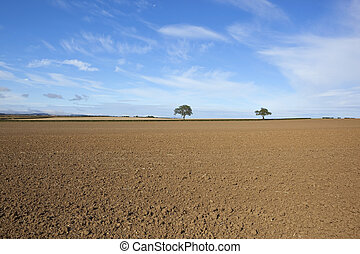 an arable landscape with two trees and hedgerows on the horizon of a cultivated field with bare soil under a blue sky