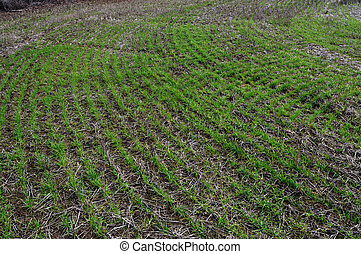 Cultivated Land - Close up photograph of cultivated field...