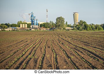 Cultivated land closeup - Cultivated land with plants...