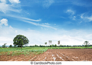 Cultivated land for planting in central Thailand