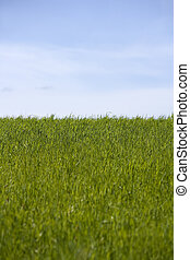 Cultivated Land - Green Grass in front of blue sky