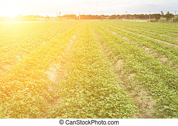 Cultivated land in a rural landscape