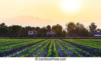 Cultivated land in a rural landscape at sunset