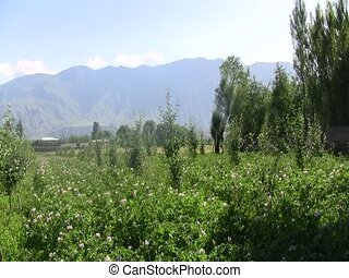 Cultivated land in Afghanistan - Cultivated agricultural...