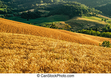Cultivated land in Northern Apennines, Bologna province, ...