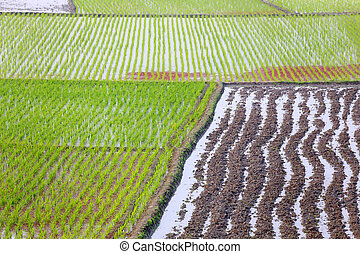 Cultivated land of Bangladesh