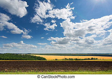 Cultivated land - Panoramic view of cultivated land