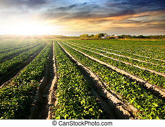 Cultivated Land - Cultivated land in a rural landscape at...