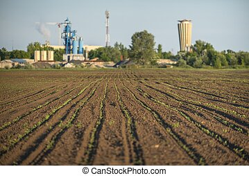 Cultivated land with plants closeup photo sunligh