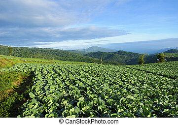 cultivated land, Phu Tub Berg, Phetchabun province, Thailand