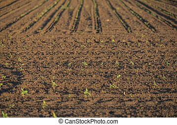 Cultivated land with plants - Cultivated land with fresh...