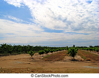 cultivated land with plants in a row
