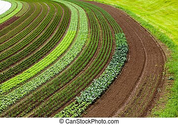 cultivated land with vegetable patches