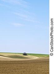 Cultivated landscape portrait large sky