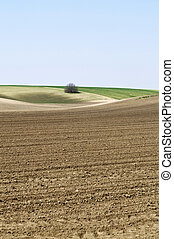Cultivated landscape portrait small sky