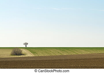 Cultivated landscape with a tree on horizon left