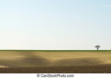 Cultivated landscape with a tree on horizon right