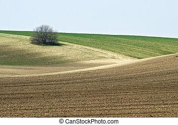 Cultivated landscape with bush close