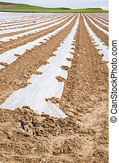 cultivation with plastic lines