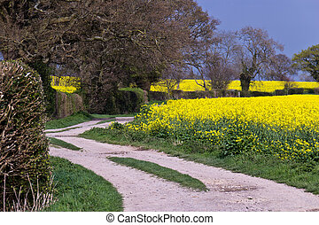 cultive campo, rapeseed, estrada