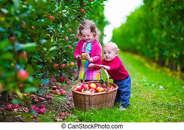 cultive fresco, escoger, niños, manzana