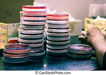 culture media plates stacked vertically on top of each other for colony analysis in a medical microbiology laboratory